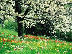 Câmp cu flori