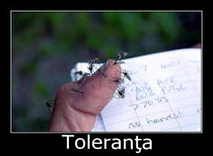toleranta3