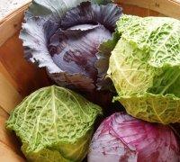 200x180_Cabbage