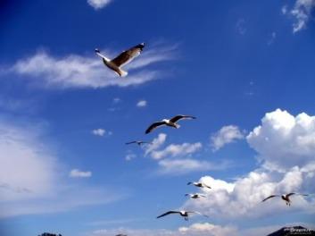 pescarusi-in-cerul-albastru-2007319