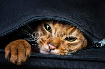 pisica-politica